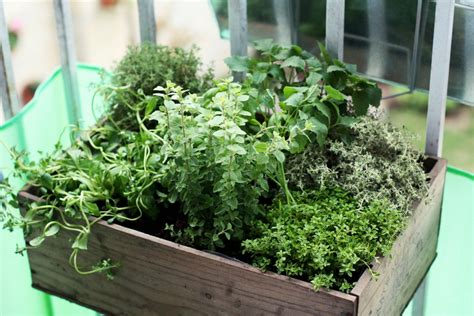 container gardening for beginners - Container Herb Garden For Beginners
