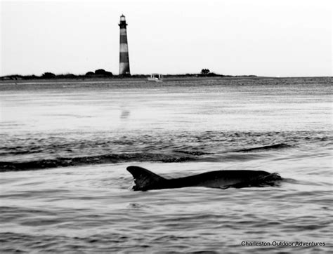 charleston sc dolphin boat tour lighthouse tours charleston sc things to do see