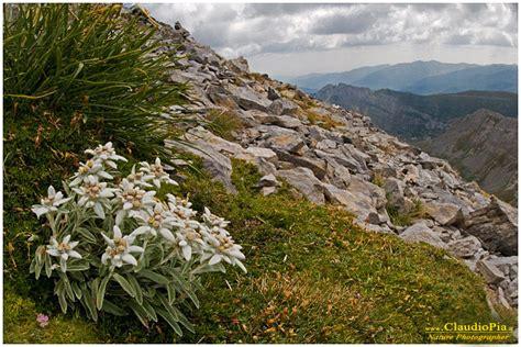 piante e fiori di montagna piante e fiori di montagna idee per il design della casa