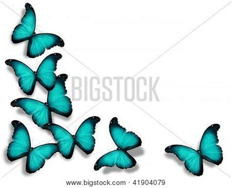 imagenes de mariposas azul turquesa mariposas color turquesa imagui