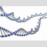 Biology Dna Clipart | 2000 x 1461 jpeg 195kB