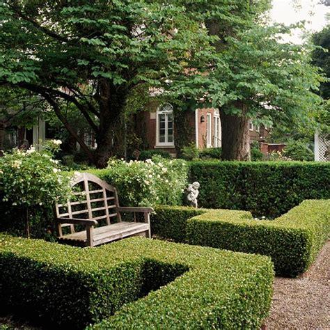 prezzi siepi da giardino piante da siepe prezzi siepi piante siepe prezzi
