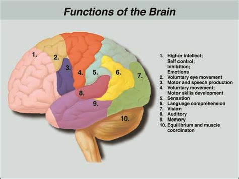 memory section of the brain 82 best images about anoxic brain injury on pinterest