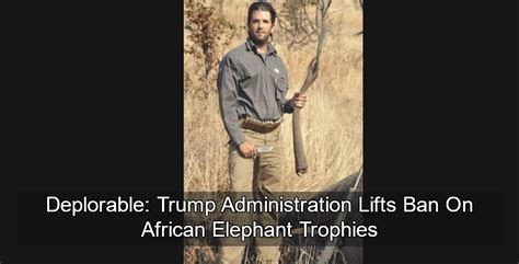 donald trump elephant trump administration lifts ban on african elephant trophies