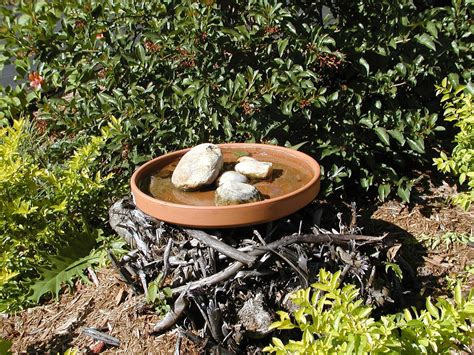 how to attract birds to bird bath bird cages