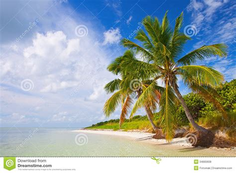 Tropical L by Tropical Summer With Palm Trees Stock Photo Image 34665608