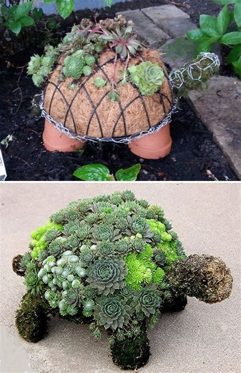 cute succulents how to make a succulent turtle this is so cute diy