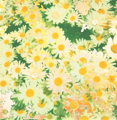 imagenes tumblr margaritas flores margaritas tumblr