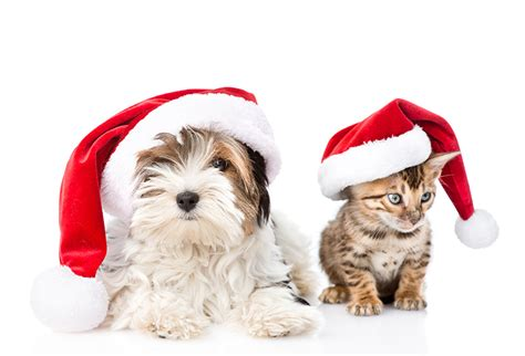 christmas hats for cats