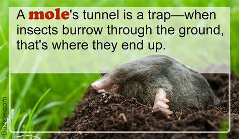 what do moles eat you could never have imagined this