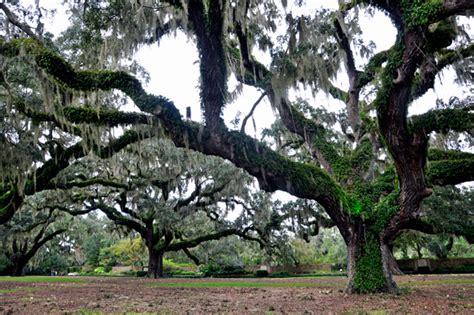 Live Oak Gardens by Brookgreen Gardens In South Carolina Page 3 Of 3