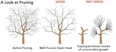 how and when to prune fruit trees the tree center