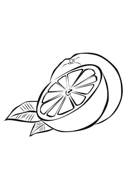drawing orange coloring pages