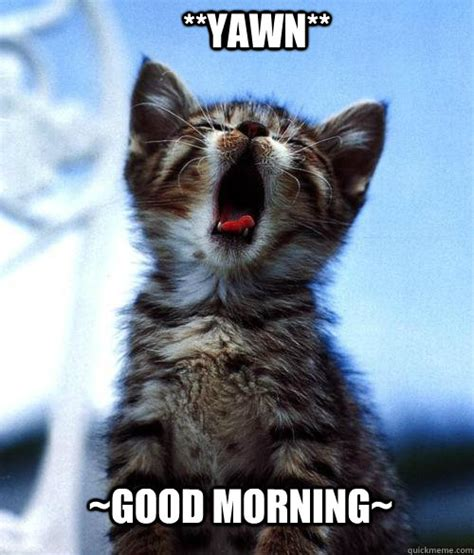 Good Meme Cat - good morning yawn good morning quickmeme