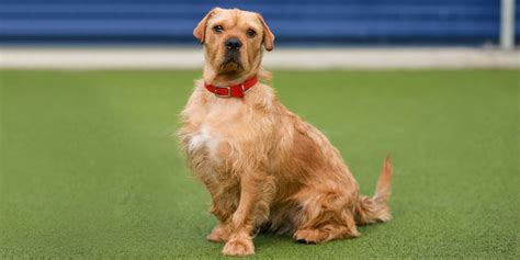 dogs battersea dogs cats home