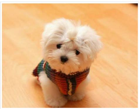 cutest breeds what are the cutest breeds quora