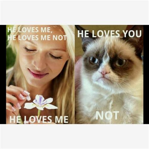 Grumpy Cat Meme Valentines Day - pin by sheryl westerman on grumpy cat rules pinterest