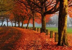 In Fall Autumn Tyson Trepidations