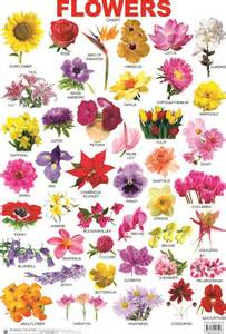 Flowers With Names » Home Design 2017