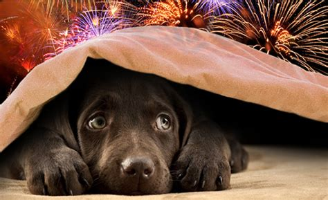how to comfort dogs during fireworks 3 tips to help your pets during fireworks season one
