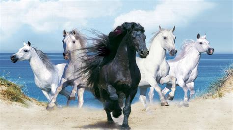 beautiful background  animals hd  black horse