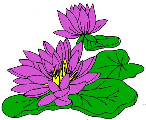 lilies or lillies all cliparts water lily clipart clipart best clipart best