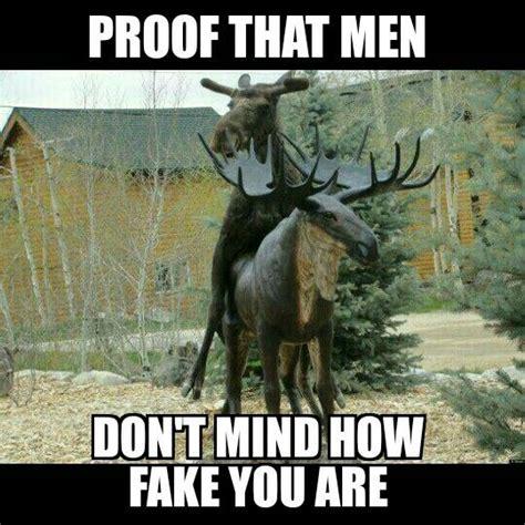 Moose Meme - funny moose memes