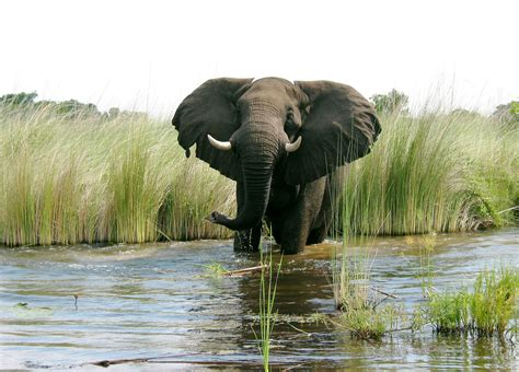 elephant wallpaper for walls elephant wallpaper for pc full hd pictures