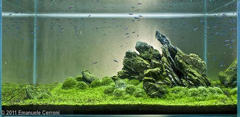 Aquascape Rocks by 2011 Aga Aquascaping Contest 250