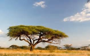 Landscaping Savannah Ga by World View Beautiful Landscapes