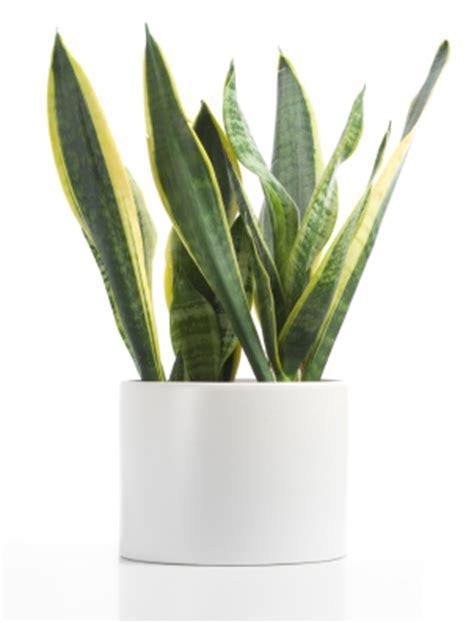 top indoor plants best indoor plants