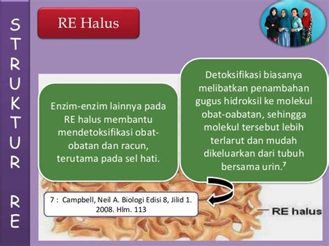 Obat Obat Penting Oop Cetakan Ke 6 Edisi 3 retikulum endoplasma