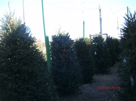 christmas trees for sale in wylie and sachse texas