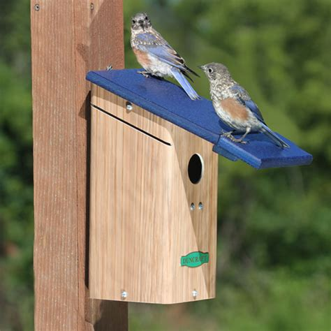 Duncraft Com Duncraft Birdsafe Bluebird House With Wren Shield