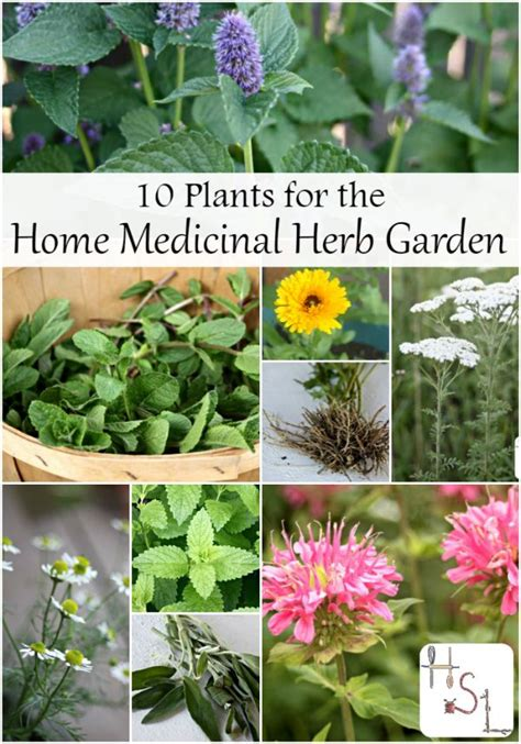 10 tips for growing your own herb garden outdoor living 475 best images about gardening medicinal herbs on