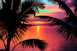 amazing beautiful colorful palm trees image 618652