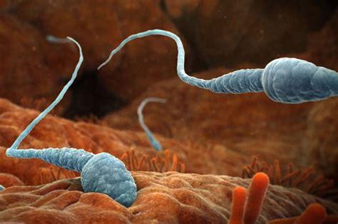 sperm of a girl will look like sperm defect may affect a quarter of world s men mirror