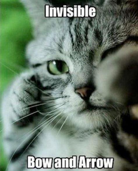 Invisible Cat Memes - invisible cat memes memes
