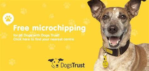 how much does it cost to microchip a free microchipping for dogs preloved uk
