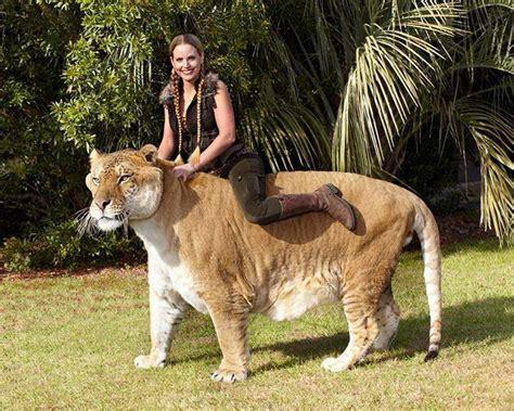 World's Largest Animals Alive Today   Slapped Ham