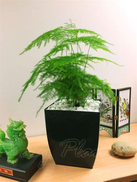 office house plant  square milano gloss black pvc pot