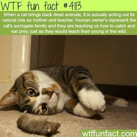 why cat brings dead animals back wtf fun facts | they're