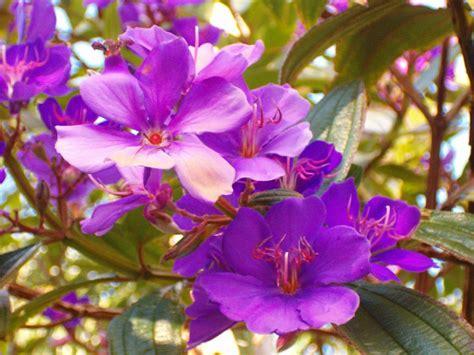 plant with purple flowers flowers purple flowers