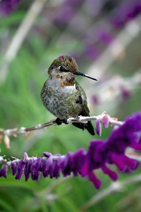 736 best feathered friends hummingbirds images on