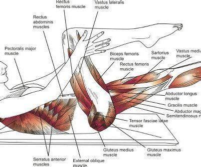 pilates anatomy 17 best images about pilates on pilates workout pilates moves and pilates reformer