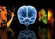 l alzheimer porta alla morte l anello mancante nella genesi dell alzheimer le scienze