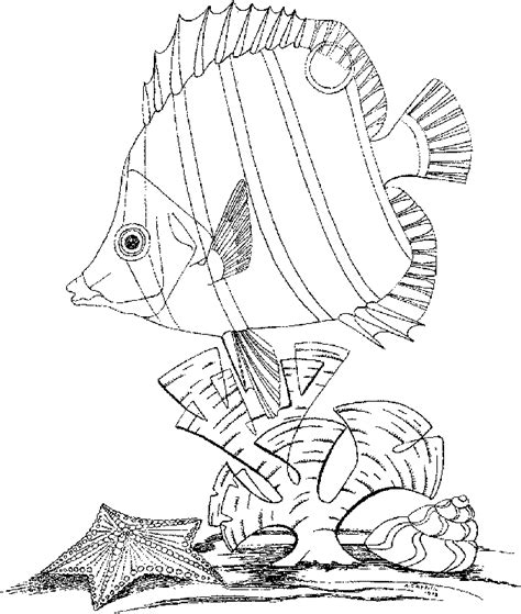 coloring pages of saltwater fish reef fish coloring pages realistic coloring pages