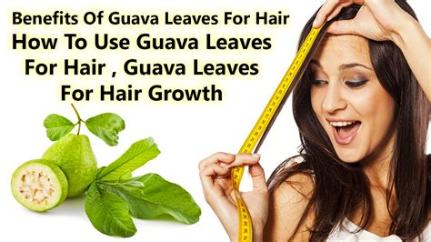 were in cincinnati can i find hair to do latchhook styles benefits of guava leaves for hair how to use guava leaves