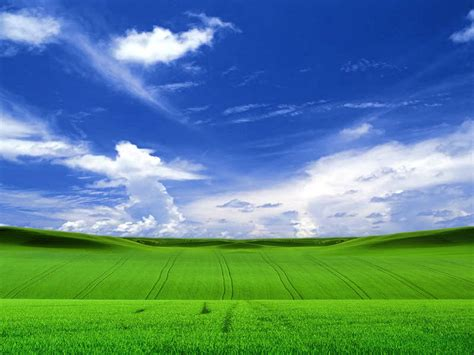 wallpapers for xp desktop free download background wallpaper field in windows xp style