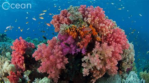 dive the world diving the world s richest reefs raja at indonesia